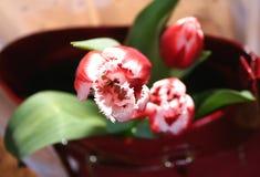 Tulips and women`s bag Stock Photos