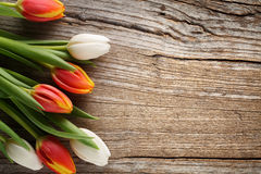 Tulips on wood background Royalty Free Stock Photos