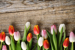 Tulips on wood background Royalty Free Stock Photo