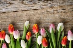 Tulips on wood background Royalty Free Stock Photo
