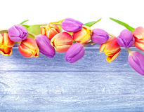 Tulips, wood, card Stock Photography
