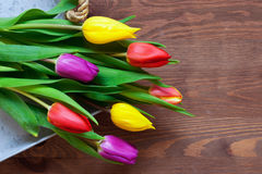 Tulips on a wooden background Stock Image