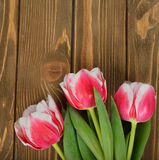 Tulips on a wooden background Stock Images