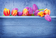 Tulips, wooden background Stock Images