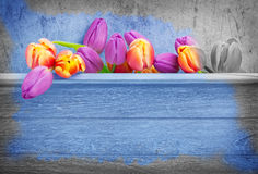 Tulips, wooden background Royalty Free Stock Photos