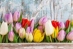 Tulips on wooden background Stock Images