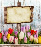 Tulips on wooden background Royalty Free Stock Photography