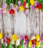 Tulips on wooden background Stock Image