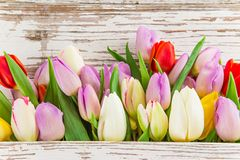 Tulips on wooden background Royalty Free Stock Photo