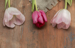 Tulips on a wooden background Royalty Free Stock Photo