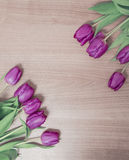 Tulips on a wooden background. Tulips lying on a wooden background Royalty Free Stock Image
