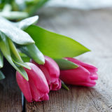 Tulips  on wooden board with copyspace Royalty Free Stock Image