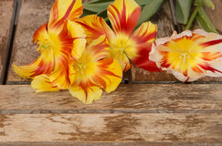 Tulips on wooden board. Stock Image