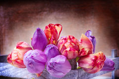 Tulips in wooden box Royalty Free Stock Photography