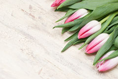 Tulips. On the wooden plan Stock Images