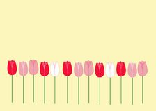 Tulips on yellow. Color tulips on sunny yellow background Stock Photos