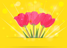 Tulips on yellow bokeh. Spring background. Stock Photography