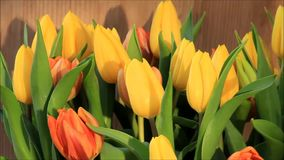 Tulips yellow orange rotate stock video footage