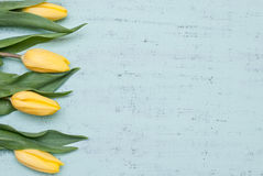 Tulips. Yellow tulips on rustic wood Royalty Free Stock Photo