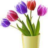 Tulips in a yellow vase Stock Images