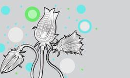 Tulips02 Royalty Free Stock Photos