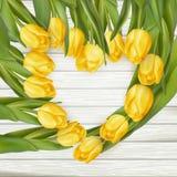 TulipsWood 20160327-5- 34 Photographie stock
