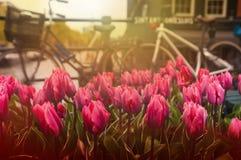 Tullips和自行车在街道上在运河,阿姆斯特丹, Netherland附近 免版税库存照片