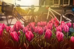 Tullips and bicycles on street near canal, Amsterdam, Netherland Royalty Free Stock Photos