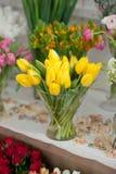 Tullips della primavera Fotografie Stock