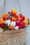 Tullips della primavera Fotografia Stock Libera da Diritti