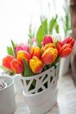 Tullips della primavera Immagini Stock