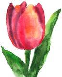 Tulp royalty-vrije illustratie