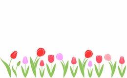Tulp Abstracte bloemen op witte achtergrond Royalty-vrije Stock Afbeelding