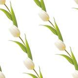 Tulp, bloemenachtergrond, naadloos patroon. Stock Foto's