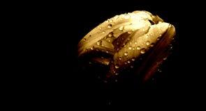 Tulp in de regen stock foto's