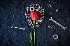 Tulp door noten wordt omringd die Royalty-vrije Stock Fotografie