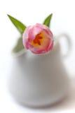 Tulp in een witte melkkruik Royalty-vrije Stock Afbeeldingen