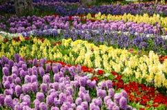 Tulp en hyacintbedden in het park Stock Foto