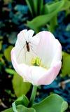 Tulp en insect royalty-vrije stock afbeeldingen