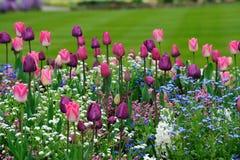 Tulp en madeliefjespatroon royalty-vrije stock afbeelding