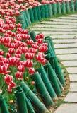 Tulp en weg Royalty-vrije Stock Foto's