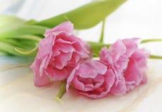 Tulp et cadeaux images stock