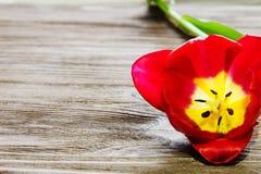 Tulp op de houten achtergrond Stock Foto
