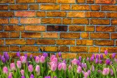 Tulp op uitstekende baksteenachtergrond en ruimte Royalty-vrije Stock Foto
