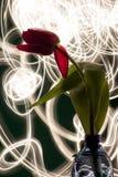 Tulp tegen licht het schilderen spel stock fotografie