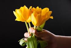 Tulp ter beschikking Stock Afbeelding