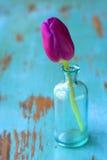 Tulp in vaas Royalty-vrije Stock Afbeelding
