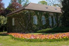 Tulpan är runt om ett hus Royaltyfri Fotografi