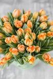 Tulpan av orange färg i grön vas Stora knoppar av mångfärgade tulpan Blom- naturlig bakgrund Fyllda Bicolour tulpan Royaltyfri Bild
