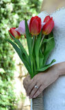 Tulpan blommar i damhänder fotografering för bildbyråer